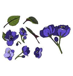 pansy or heartsease or viola flower vector image