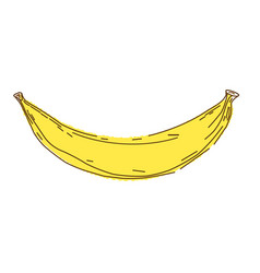 Banana sketch and doodle vector