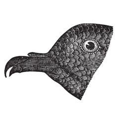 Black petrel vintage vector