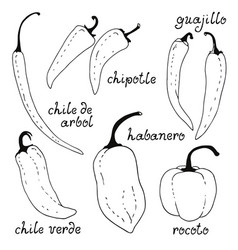 Chili peppers collection hand drawn doodle set vector