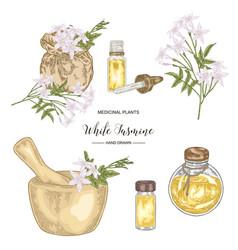 Collection white jasmine jasminum officinale vector
