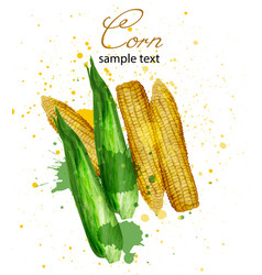 corn watercolor delicious colorful designs vector image
