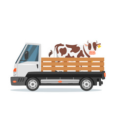 Farmers car truck carrying cow vector