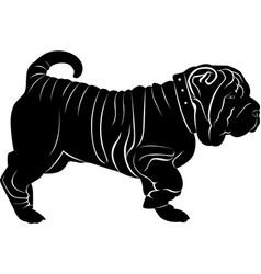 shar pei dog isolated on white background vector image