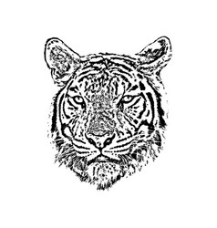 a tiger face on white background wild animals vector image vector image
