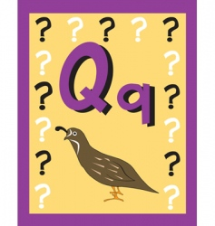 flash card q vector image vector image