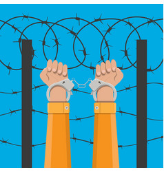 Handcuffs on hands and barbed wire vector