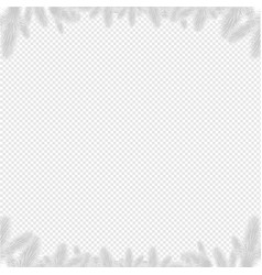 firtree border isolated vector image