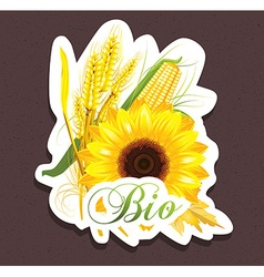 Bio sunflower tag vector image