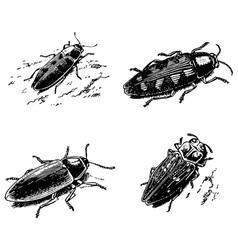Buprestidae vector