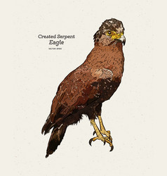 Crested serpent eagle spilornis cheela hand vector