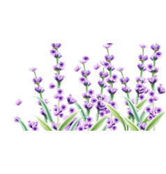lavender watercolor card backgrounds summer vector image