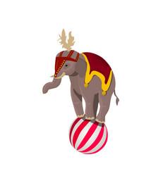 circus elephant balancing on ball vector image