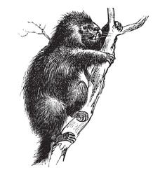 Porcupine vintage engraving vector image