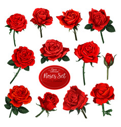 Set of red rose flower blooms with green leaves vector