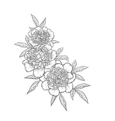 Beautiful monochrome black and white bouquet peony vector