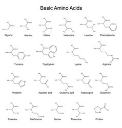 Chemical structures of basic amino acids vector image
