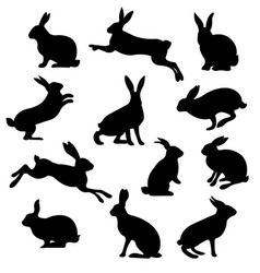 rabbit set isolated vector image