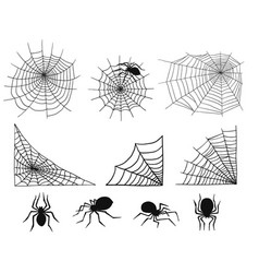 Spiders web silhouette spooky spider nature vector