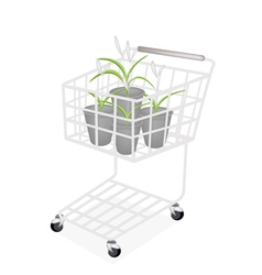 A Set of Dracaena Plant in A Shopping Cart vector