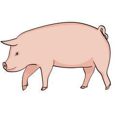farm animal boar pink pig on a white background vector image