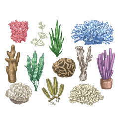 hand drawn seaweeds and corals sea reef and vector image