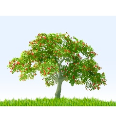 Summer landscape with sky green grass and tree vector