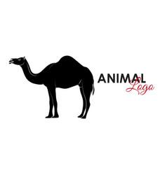 camel icon logo symbol vector image