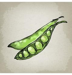 fresh green peas in the husk vector image