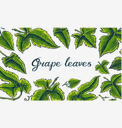 green berry leaves grape background ingredient vector image
