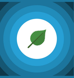 isolated alder flat icon linden element vector image