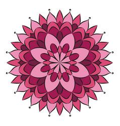 pink colored circular round floral mandala vector image