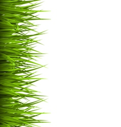 Green grass lawn isolated on white Floral eco vector image
