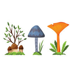 mushroom and toadstool the vector image