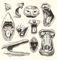 animals with open mouth heads of roaring vector image