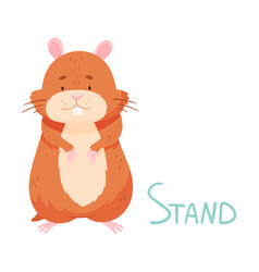 Cute hamster standing demonstrating english verb vector