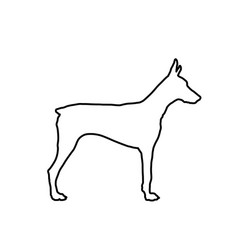 Doberman pincher dog line contour vector