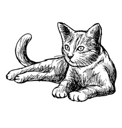 Freehand sketch of little cat vector