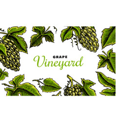 Grape background ingredient for wine and juice vector