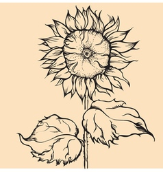 hand drawn single sunflower vector image