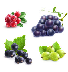 Realistic berries set vector