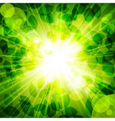 sun in green leaves vector image