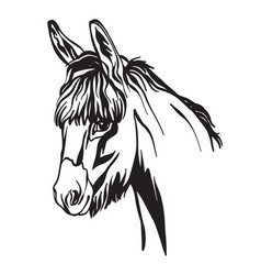 abstract portrait line black contour donkey vector image