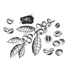black and white set coffee beans vector image