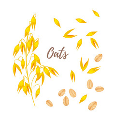 Cereals - oats oatmeal and seeds vector