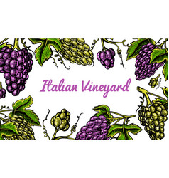 grape background ingredient for wine and juice vector image