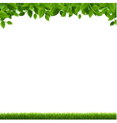 green grass and leaves border white background vector image