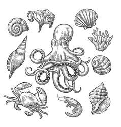 Set sea shell coral crab shrimp and octopus vector