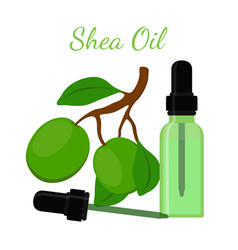 shea nut oil in bottlecartoon flat style vector image