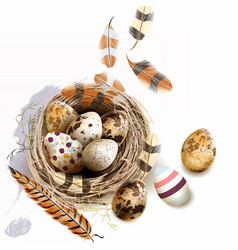 with easter eggs bird nest feathers vector image